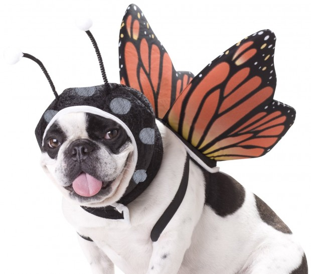 20 Absolutely Amazing Dog Halloween Costumes (8)