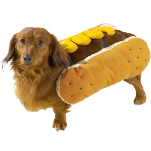 20 Absolutely Amazing Dog Halloween Costumes (9)