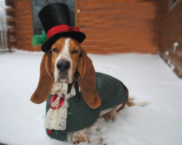 30 Extraordinary Christmas Pet Clothing and Accessory Pieces (10)