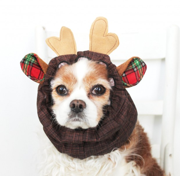 30 Extraordinary Christmas Pet Clothing and Accessory Pieces (14)