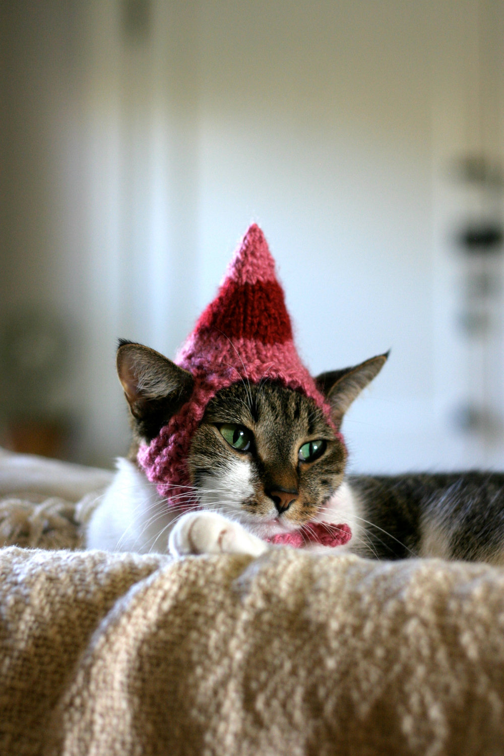 30 Extraordinary Christmas Pet Clothes and Accessories - Style ...