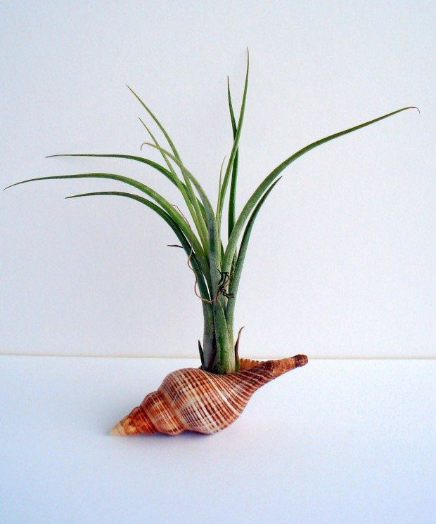 25 Cool and Handmade Planter Designs (6)
