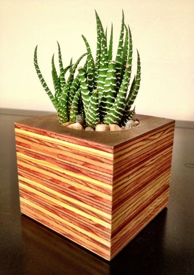 15 Natural and Handmade Living Succulent Decorations (1)