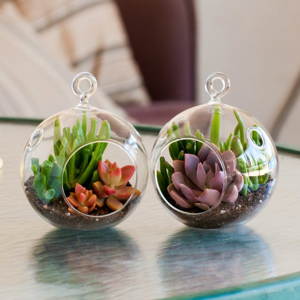 15 Natural and Handmade Living Succulent Decorations (11)
