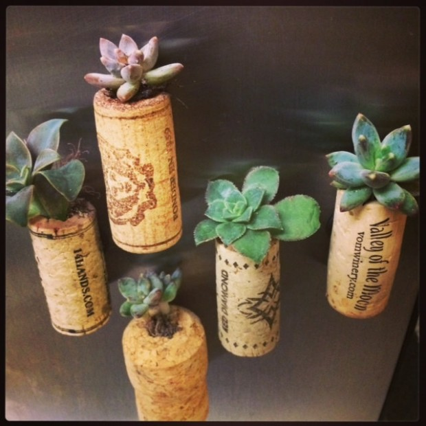 15 Natural and Handmade Living Succulent Decorations (13)