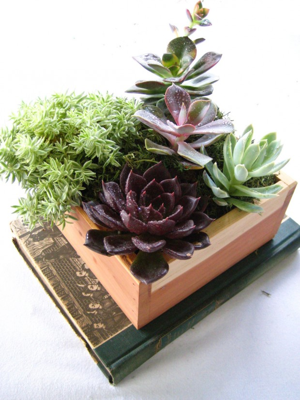 15 Natural and Handmade Living Succulent Decorations (2)