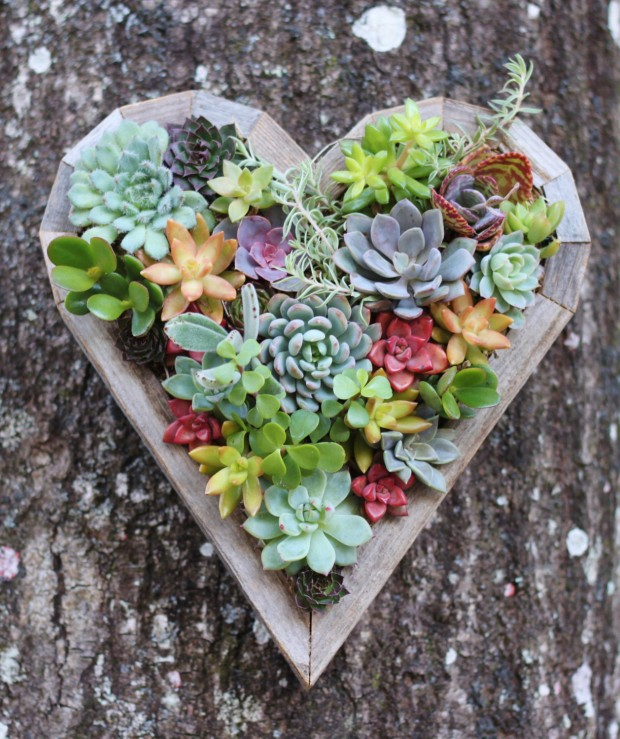 15 Natural and Handmade Living Succulent Decorations (3)