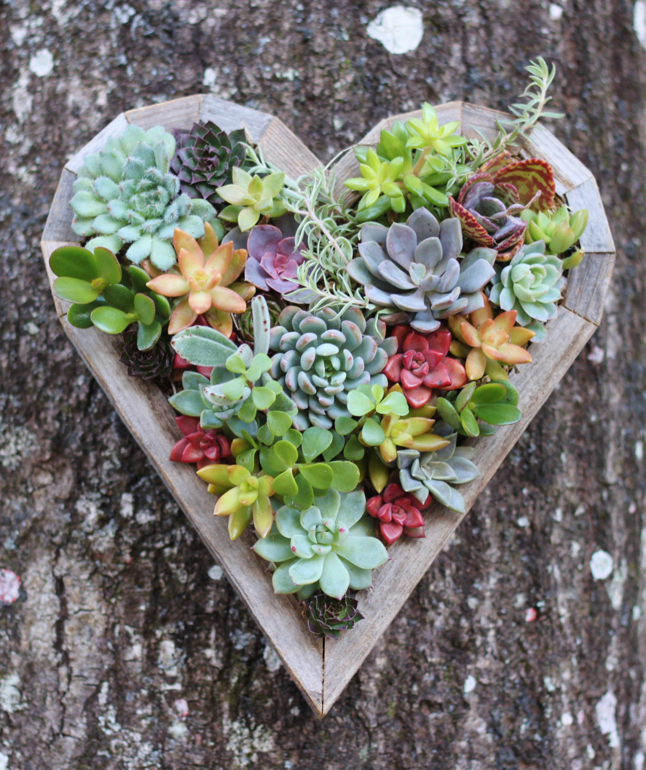 15 Natural and Handmade Living Succulent Decorations ...
