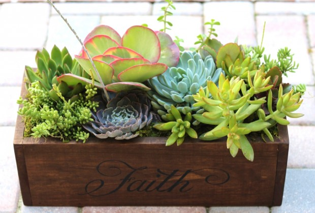 15 Natural and Handmade Living Succulent Decorations (4)