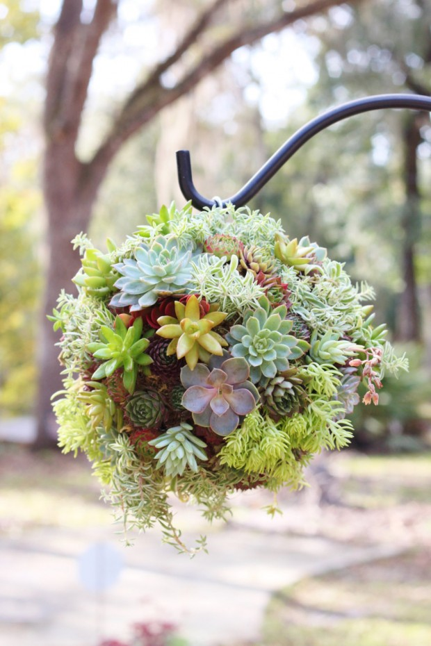 15 Natural and Handmade Living Succulent Decorations (6)