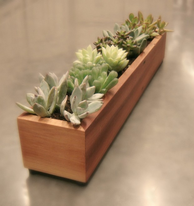 15 Natural and Handmade Living Succulent Decorations (9)
