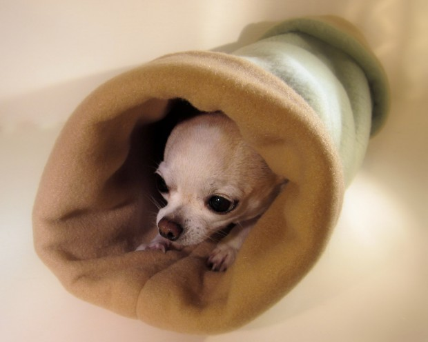 17 Creative Handmade Pet Home Ideas