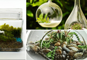 17 Magnificent Terrarium Spring Decorations - zen, vase, upcycled, unicorn, tillandsia, terrarium, Succulent, spring, season, recycled, pyramid, plant, nature, Natural, moss, mini, micro, mason jar, marimo, lively, live, light, leaves, interior, home, handmade, green, glass, geometric, Flower, decoration, decor, cube, cold, bulb, bottle, air plant