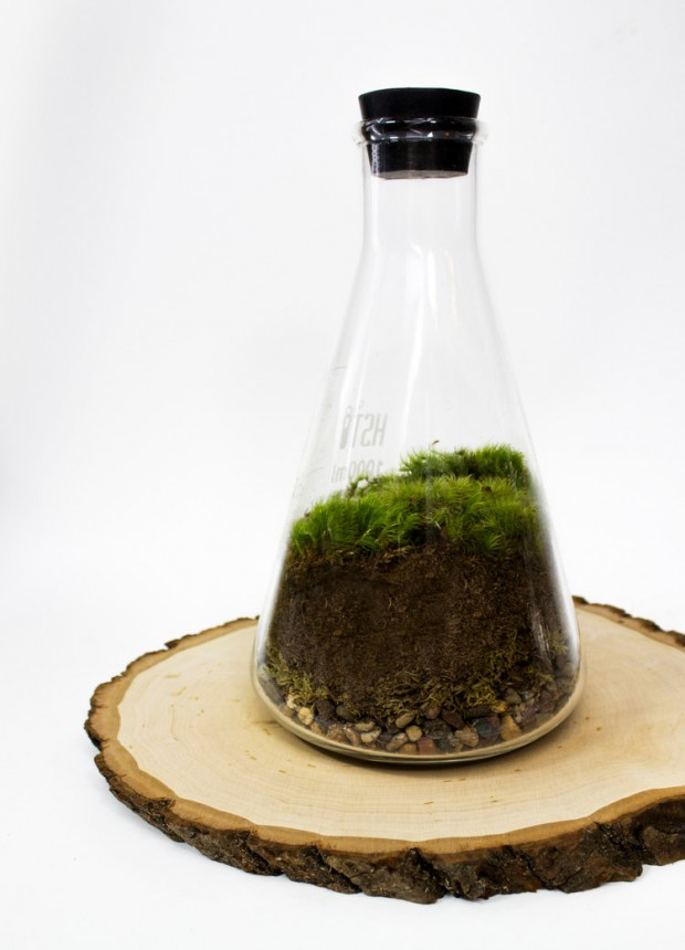 27 Small and Cute Themed Terrariums