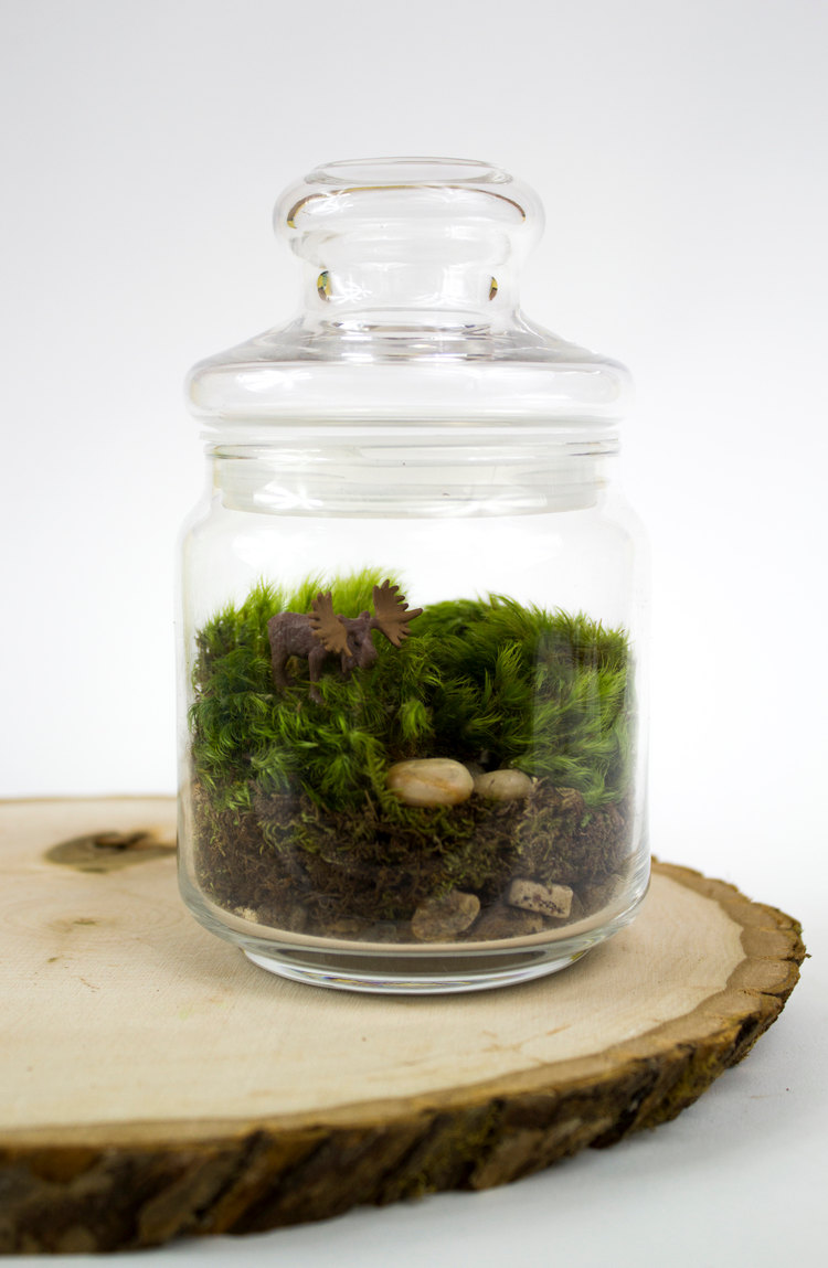 27 Small And Cute Themed Terrariums Style Motivation