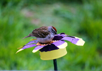 16 Creative DIY Bird Feeders - Welcome The Feathered Friends In Your Backyard - spring, diy, crafts, craft, birdfeeder, bird feeders, bird feeder, bird