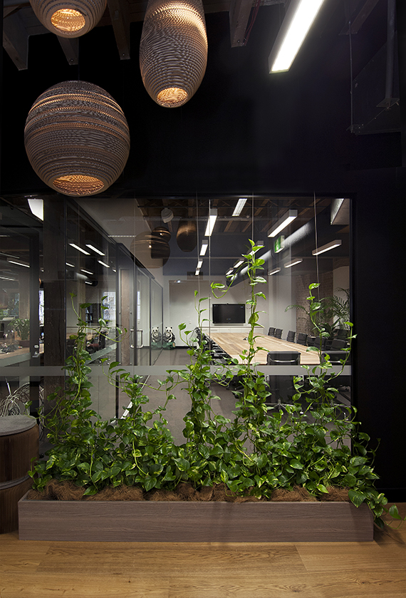 Can Indoor Plants Affect your Business Productivity?