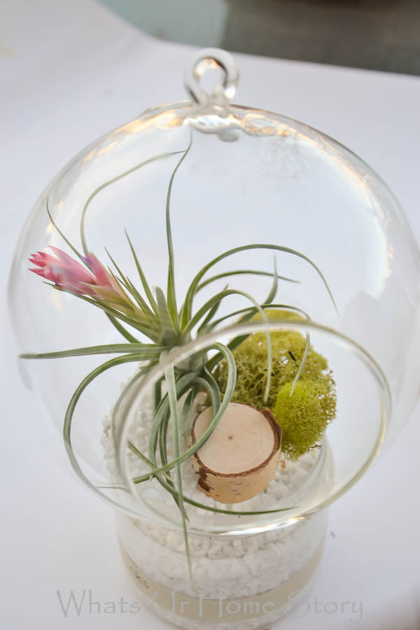 20 Adorable DIY Terrarium Ideas