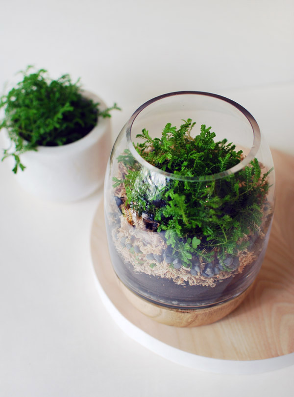 How To Make Terrarium 18 Great Diy Ideas Style Motivation