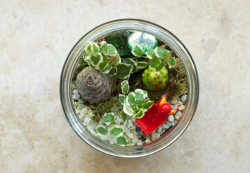 How to Make Terrarium: 18 Great DIY Ideas - terrarium ideas, terrarium, how to make terrarium, how to make, diy terrarium