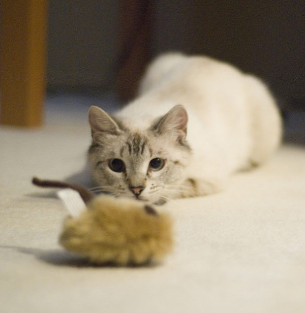 4 Steps for Preparing Your Home for a New Cat