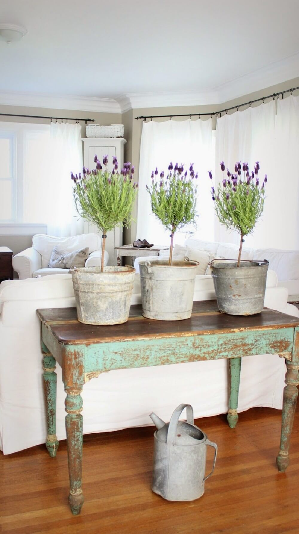 Bring Colorful Potted Plants Indoors