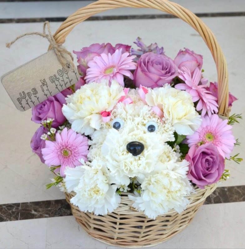 Cuddly Carnation Terrier Nestled in Basket