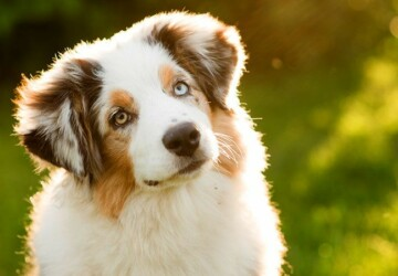Love Animals? Here's Some Tips On Keeping Your Dog Healthy! - Pet, food, animals