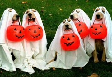 15 Creative Halloween Costumes for Dogs - halloween dog costumes, Halloween costumes, dog costumes, diy Halloween costumes