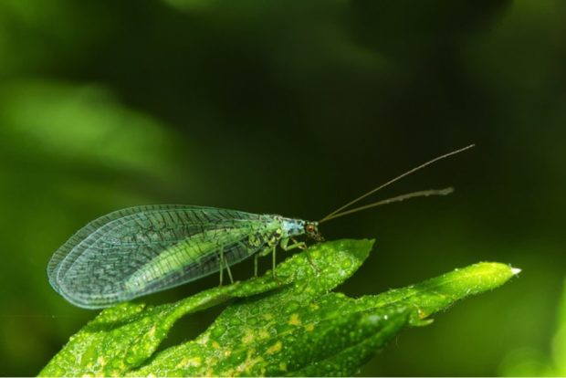 Natural Pest Control for Your Garden This Spring