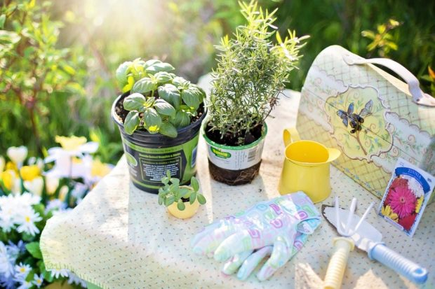 How to Plan an Herb Garden