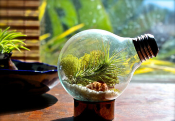 17 Creative DIY Terrarium Ideas - terrariums in home decor, terrarium ideas, how to make terrarium, DIY Terrarium Ideas, diy terrarium