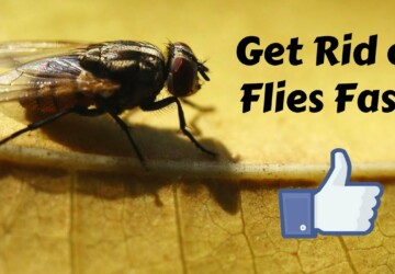 How to Get Rid of Flies Indoors? - vectothor, get rid of flies