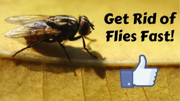 How to Get Rid of Flies Indoors?