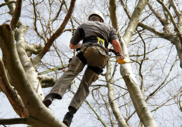 Characteristics of a Reliable Tree Removal Company - tree, remover, outdoors, garden