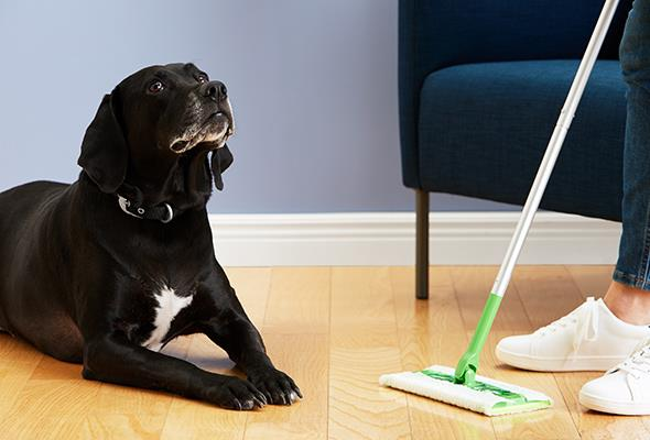 How to Get Rid of Pet Hair - pet hair, dog, cleaning