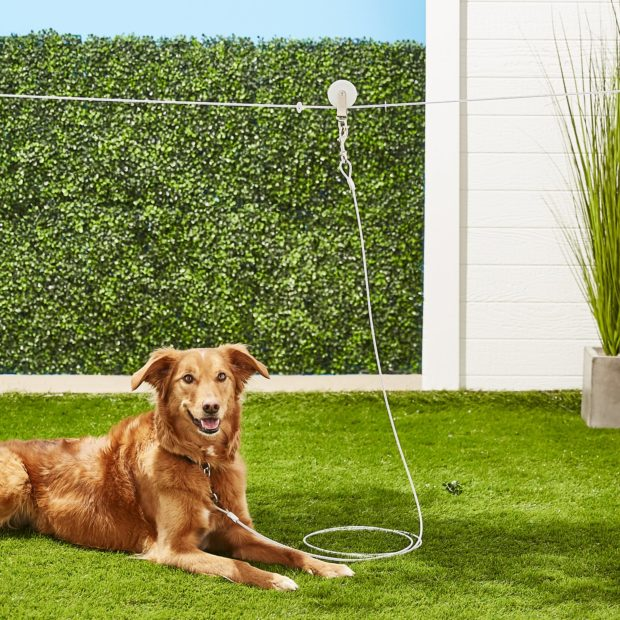 6 Ideas For Creating A Backyard Your Dog Will Dig