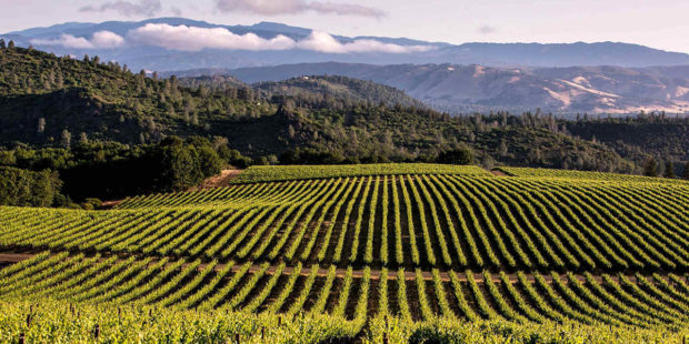 The Top Places to Visit in California Wine Country - winery, wine country, visit, vineyard, top places, nature parks, california