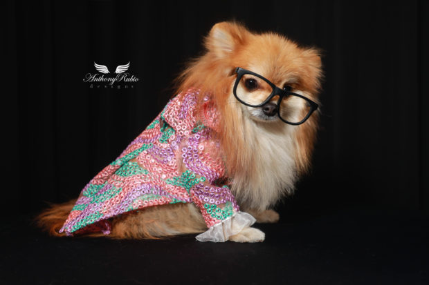 5 Tips For You And Your Dog To Stay Warm And Fashionable This Winter - pouch, matching sweaters, leggings, fashionable, dog mat, dog