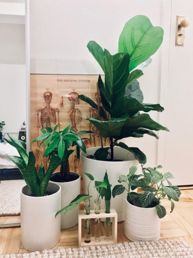 Decorate with Plants and Brighten up your World - Plants, home decor, hanging plants