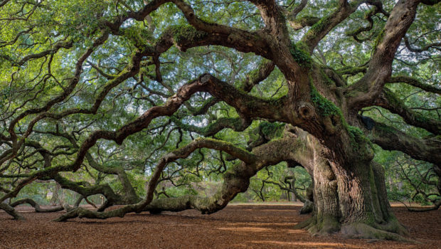 How to Keep Your Beautiful, Old Trees - water, trees, tree hanging, soil, roots, old tree, care, bark