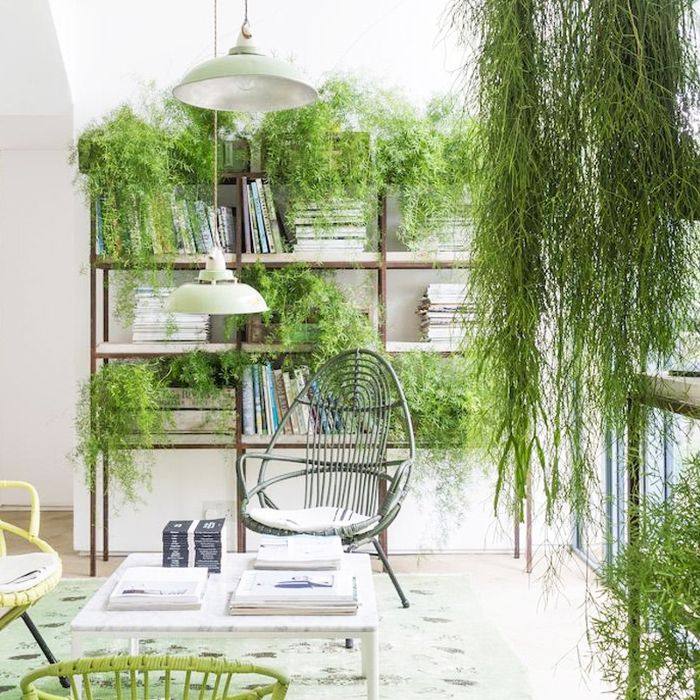 Decorating Dilemma House Plants: Decorate With Plants And Brighten Up Your World
