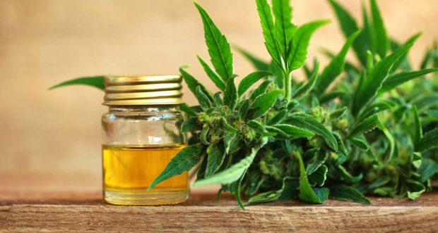 Skin Care Benefits From Cannabis Oil