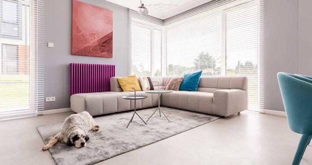 How to Keep a Clean House When Living With Pets - stains, pets, pet hair, pet exercise, messy, huse, de-stink, clean, bathe regularly