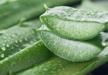 15 Ways to Use Aloe Vera as a Beauty Product - Use Aloe Vera as a Beauty Product, homemade beauty products, diy beauty products, Beauty Product, aloe vera