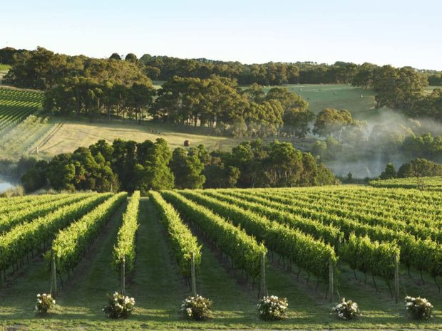 Best Wineries in Mornington Peninsula