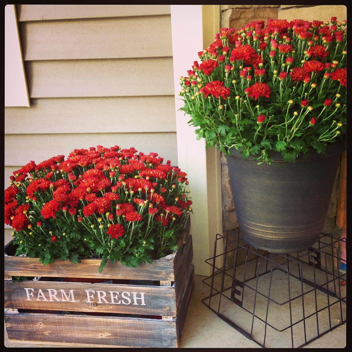 Rustic Metal Bucket and Wood Crate Planters