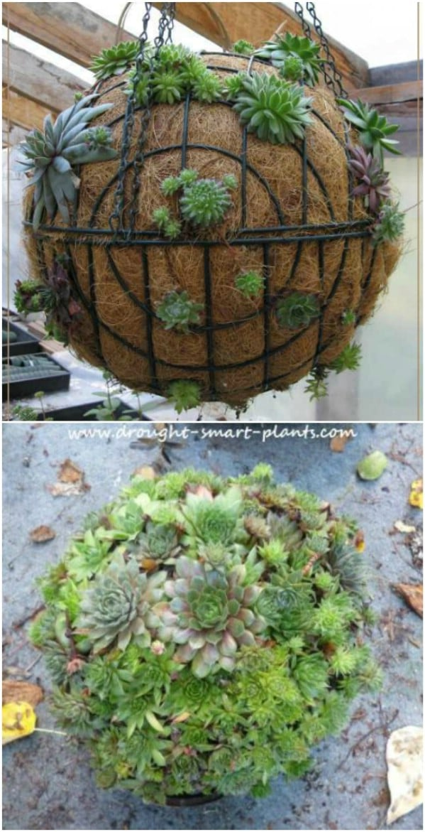 15 Easy DIY Backyard Succulent Garden Ideas