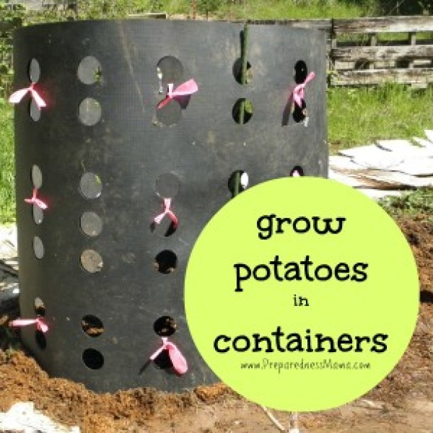 15 DIY Innovative Ways To Grow Your Own Food - Grow Your Own Food, diy garden projects, DIY Garden Plant, DIY Garden Ideas, diy garden, balcony garden