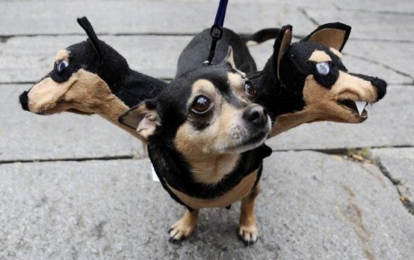 3-headed dog | 25+ Creative Costumes for Dogs